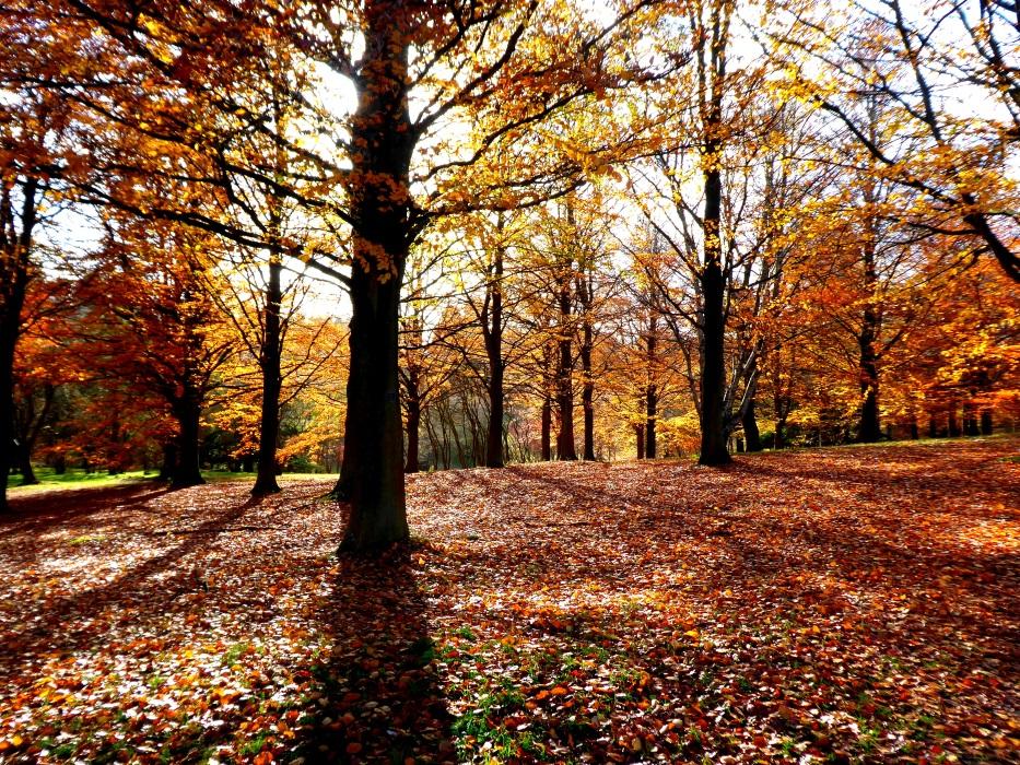 Autumn sunlight on trees.